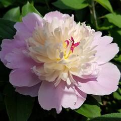 令和の一枚/フォロー大歓迎/LIMIAファンクラブ/暮らし/LIMIA/令和元年フォト投稿キャンペーン/... 『お庭の花達🌼🌿🥀💠🌻』