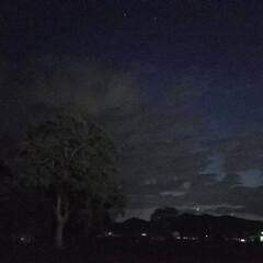 ホタル/ガーデン/庭/わんこのいる暮らし/犬のいる暮らし/お散歩シリーズ/... 🐩🚶♀️夜のお散歩✨ 📸いつもと違う雰…