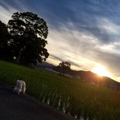 みるくと夕陽/散歩/空と犬/sky/青空/SORAMADO/... 青空  良いよね~   (´ー`).。*…(4枚目)