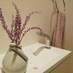 お花/住まい/紫の花 可愛い紫のお花を買いましたが、 名前がわ…