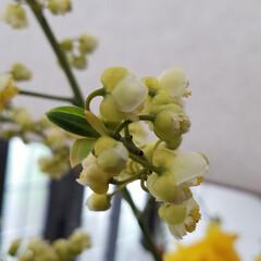 花の名前/白い花/花のある暮らし 先日あっぷした玄関のお花です🤭🎵 (きの…