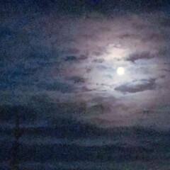 月夜/お散歩シリーズ/お散歩/ペット/犬/おでかけ 月夜の晩に…お散歩🐾  暗すぎて ごめん…