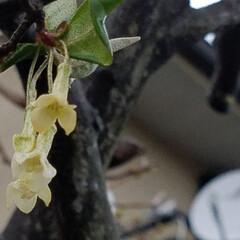 お花/雨上がりの庭/雨あがりの花/フィンガーライムの木/庭の花/庭のある暮らし/... ☔昨日は、大雨と風🍃🌀〰️(>_<)  …(5枚目)