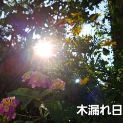 お日様/花のある暮らし/出会い/多肉植物/木漏れ日/花に囲まれたい/... 今日は、病院に来ています🤭  待ち時間に…(2枚目)