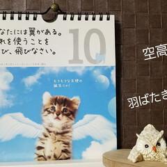 最近買った100均グッズ/カレンダー/雑貨/名言集 🐈にゃんの📆カレンダー🎵  今日の言葉は…(1枚目)