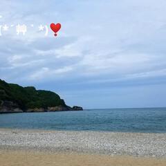 おでかけ/癒し/花/犬と花/犬のいる暮らし/散歩/... 🐩🚶♀️久々に海に行きました🚐💨🎵  …(3枚目)