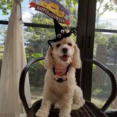 ハロウィン2018フォトコンテストに応募/ハロウィン/ペット/犬/100均 ハロウィン撮影会 ハイポーズ📸✨  …