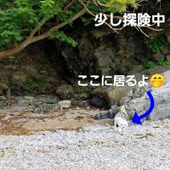 おでかけ/癒し/花/犬と花/犬のいる暮らし/散歩/... 🐩🚶♀️久々に海に行きました🚐💨🎵  …(4枚目)
