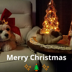 ツリー/ワンコもクリスマス/クリスマス/クリスマス2019/雑貨/フォロー大歓迎 🐩もMerry Christmas✨🎄✨…