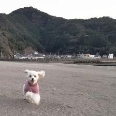 犬の散歩/フォロー大歓迎/冬/ペット/ペット仲間募集/犬/... 🐩⛱️で、のびのびとお散歩~🐾  砂浜の…