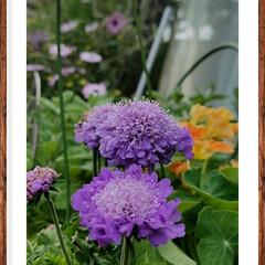 ガーデン/グリーン/花/紫色