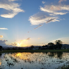 空と雲/青空/夕焼け/雲/火の鳥/おでかけ/...  火の鳥鳳凰  ⁉ 龍  ⁉  三枚目が…