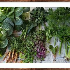 育てる/お庭/グリーン/野菜 家庭菜園🐜🌽🍆 本日の収穫。殆どミニサイ…