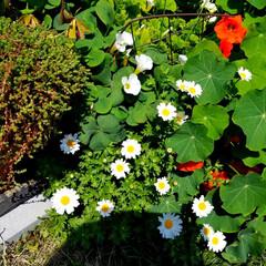 花の生活/庭の花/春の一枚/フォロー大歓迎/風景/花景色/... 庭の花達 Ⅰ  春の花達が、楽しそうに咲…(9枚目)