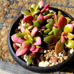 花の生活/庭の花/春の一枚/フォロー大歓迎/風景/花景色/... 庭の花達 Ⅰ  春の花達が、楽しそうに咲…(10枚目)