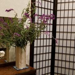 セージ/華/玄関の花/住まい/暮らし/リミアな暮らし/... 今週の出迎えのお華🌼  庭のアメジストセ…