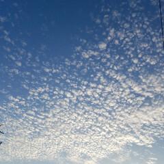 空と☁️と太陽/青空/うろこ雲/くも/おでかけ うろこ雲