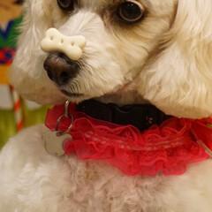 犬のいる暮らし/新年挨拶/お正月2020/暮らし/フォロー大歓迎/生花/... 🎍謹賀新年✨ ご挨拶〰❤ 『皆さん本年も…(4枚目)