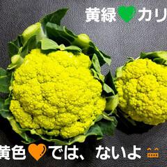 黄緑の野菜/紫の野菜/黄緑/変わった色野菜/カリフラワー/変わりダネ/... 【変わり種カリフラワー❣️】 黄色💛のカ…