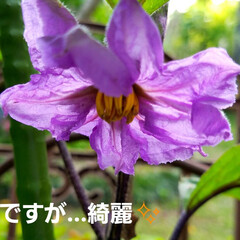 鮮やかカラー/庭/花のある暮らし/はな/ガーデン/暮らし/... 庭が、鮮やかになりました💠🌼🥀🌿(9枚目)
