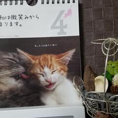 ドライフラワー/花かご/カレンダー/100均/雑貨/暮らし/... 🐈にゃんの📆カレンダー💕  今日は、私の…