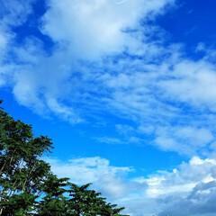 景色/いま空/花/青空/空 皆さん、こんにちは😊🎵  遅れましたが、…(1枚目)