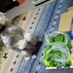 野菜届く/今日の夕焼け/夕陽/宅急便/犬と野菜/野菜/... 新鮮野菜が届いた~🍆🥒(*´艸`*)💕 …(1枚目)