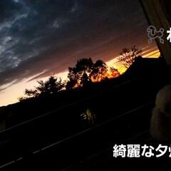夕暮れ時の空/夕暮れ秋空/夕暮れ風景/夕暮れ/お気に入り/犬のいる暮らし/... 先日の ベランダから見た夕焼け~🌄   …