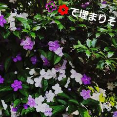 鮮やかカラー/庭/花のある暮らし/はな/ガーデン/暮らし/... 庭が、鮮やかになりました💠🌼🥀🌿(8枚目)