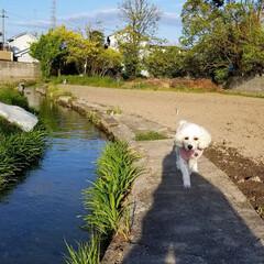 風景/夕陽/草花/犬のいる暮らし/お散歩/住まい/... お散歩🐩🚶♀️