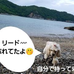 おでかけ/癒し/花/犬と花/犬のいる暮らし/散歩/... 🐩🚶♀️久々に海に行きました🚐💨🎵  …(6枚目)