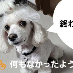 舐めれない/犬がアヒルに/みるく/ワンコの口に/アヒル口/モノトーン/... こんにちは✨😃 段々風も強くなって来てま…(4枚目)