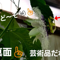 湿気対策/梅雨/梅雨対策/梅雨対策アイテム/教えて!みんなの梅雨対策 💠が咲かなくなって…🍀🍀🍀葉ぁ~    …(4枚目)