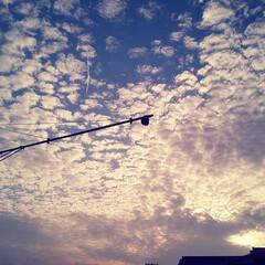 お出かけ/そら/うろこ雲/雲 うろこ雲