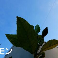 実/庭/畑/実のなってる物/ガーデン/🍘/... 庭の実がなってるものを👀📷✨しました🎵 …(6枚目)