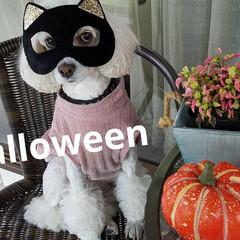 わんこもハロウィン/おめん/halloween/犬好きな人と繋がりたい/わんこのいる暮らし/わんこ同好会/... Halloweenだね〰️🎃☝ みるくも…