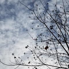 年末詣/多肉植物/冬空/散歩道/景色/風景 『今年も皆さんに沢山の癒しを頂き感謝でい…