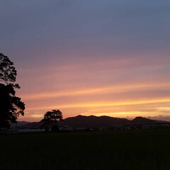 ワンコのいる暮らし/お散歩/夕陽/イマソラ/夕空/夕焼け/... 🌄🐩🚶♀️綺麗な夕焼け、撮れました~(…(4枚目)