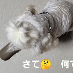 舐めれない/犬がアヒルに/みるく/ワンコの口に/アヒル口/モノトーン/... こんにちは✨😃 段々風も強くなって来てま…(1枚目)