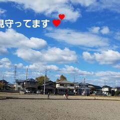 嬉しい一日/嬉しい出来事/プレゼント/花束/love/草花/... 🌞今日は、風がありましたが、秋晴れのお天…(5枚目)