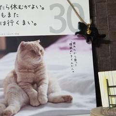 カレンダー/ワンコのいる暮らし/贈り物/潜るわんこ 🐈📆カレンダーと🐩昨夜のみるく…😏☝  …