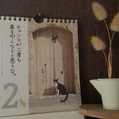 カレンダー/雑貨/100円雑貨/フォロー大歓迎/名言集 🐈にゃん📆カレンダー  このねこちゃん、…(1枚目)