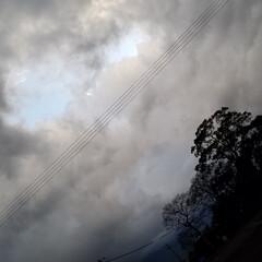 わんこのいる暮らし/雪雲/夕陽/風景/散歩道/菜の花/... 🐩🚶♀️お散歩の途中、急に雲行きが悪く…(6枚目)