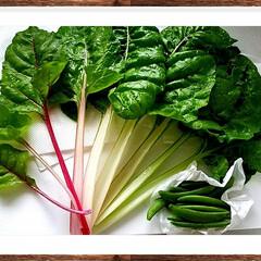 カラフル/えんどう/野菜/ガーデン/家庭菜園/グリーン/... 『本日の収穫』🌱🌿💚  スイスチャード・…