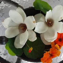 アイデア作品/テラス/庭/おすすめ/花のある暮らし/華/... コロナで気持ち暗く( ´-ω-) 庭の大…