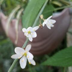 冬の🌼/花好き/ガーデニング 自宅の花達💠🌼🌿 今日は、🌞晴れてはいま…