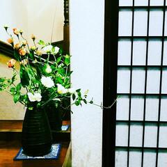 華/花/住まい/玄関 今週のお出迎えの花