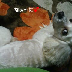 *honobono*/犬のいる暮らし/LIMIAペット同好会/フォロー大歓迎/ペット/ペット仲間募集/...  🐩みるく、可愛く撮れました。:+((*…