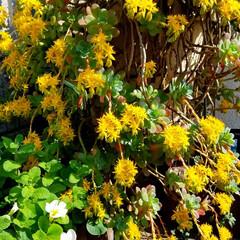 花の生活/庭の花/春の一枚/フォロー大歓迎/風景/花景色/... 庭の花達 Ⅰ  春の花達が、楽しそうに咲…(5枚目)