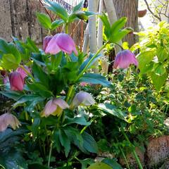 花の生活/庭の花/春の一枚/フォロー大歓迎/風景/花景色/... 庭の花達 Ⅰ  春の花達が、楽しそうに咲…(7枚目)